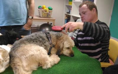 Médiation animale zoothérapie du Sourire au lien